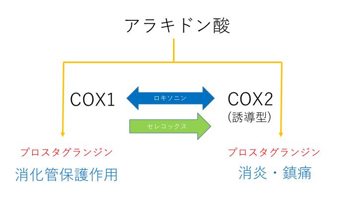 セレコックス・ロキソニン作用機序比較